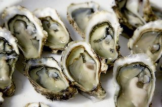 Oysters_20171004